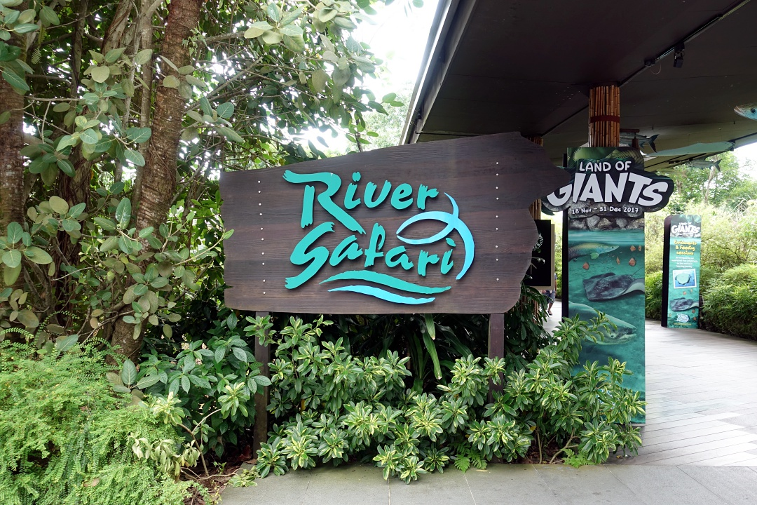 River Safari Singapore | joanne-khoo.com
