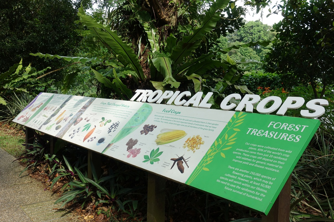 Singapore Zoo Tropical Crops | joanne-khoo.com