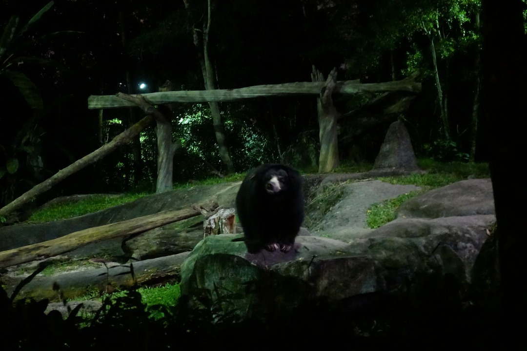 Singapore Night Safari - Sloth Bear | joanne-khoo.com